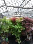 arbustes-fleuriste-flutre-eu