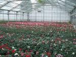composition-florale-flutre-eu01