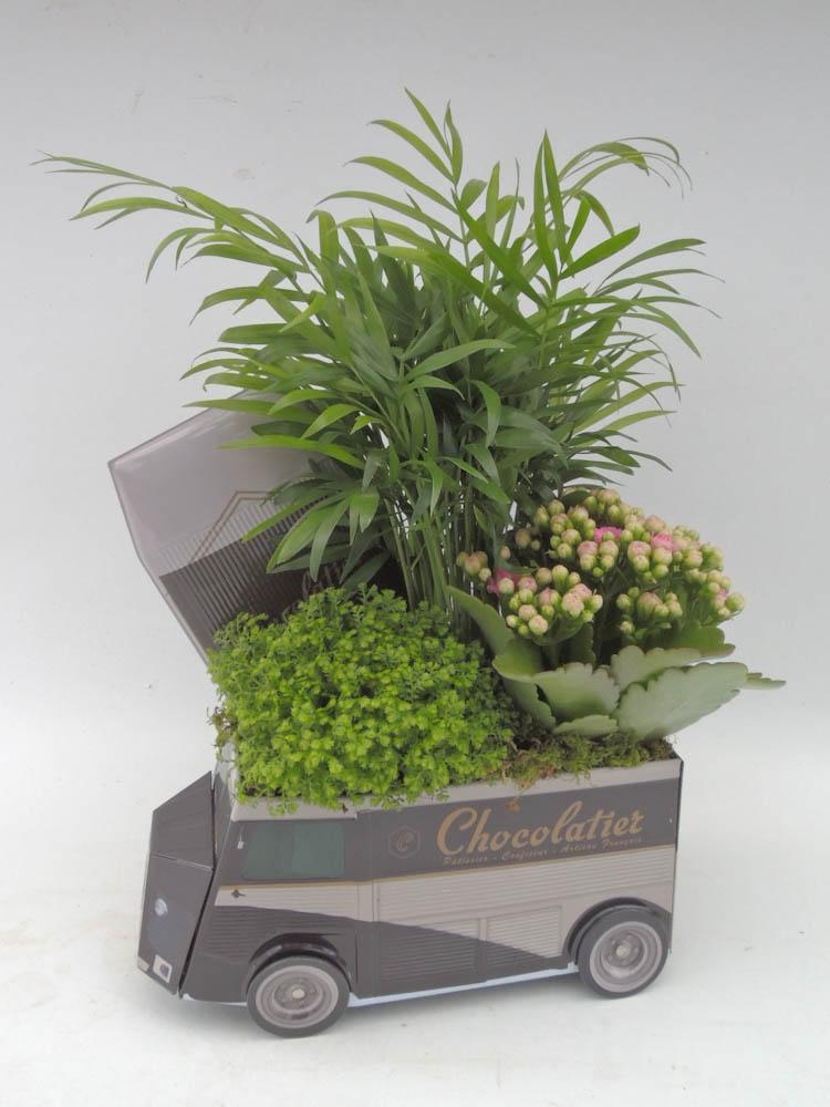 Plantes fleuriste flutre for Mini plante verte