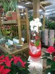 orchidée en vase sur gel
