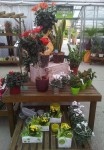compositions-florales-magasin-flutre