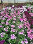fleurs-fleuriste-flutre-ville-eu