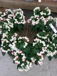 plante-fleurie-fleuriste-flutre