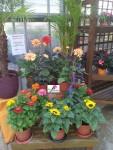 plantes-fleuriste-flutre-eu