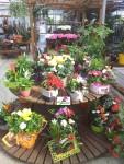 plantes-fleuriste-flutre-ville-eu
